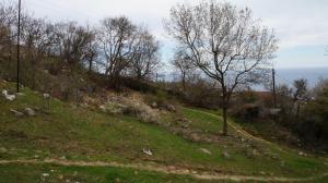 Продается земельный участок 8 сот в Гаспре.