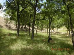 Продается земельный участок 7 сот в Алупке.
