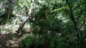 Продается земельный участок 8 сот в Мисхоре.