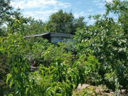 Дачный домик 12м2 на огороженом часток 4 сотки на Фиоленте